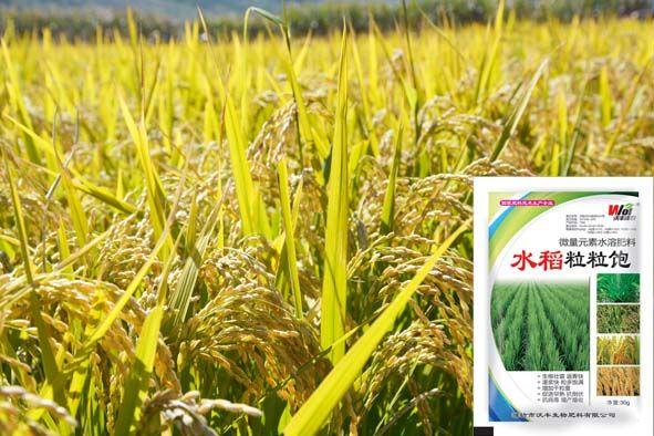 收获金秋十月 助农增产增收